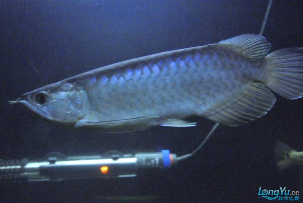 年底了·大家PP我的小青··嘎嘎··【西安鱼缸价格】 西安观赏鱼信息 西安博特第6张