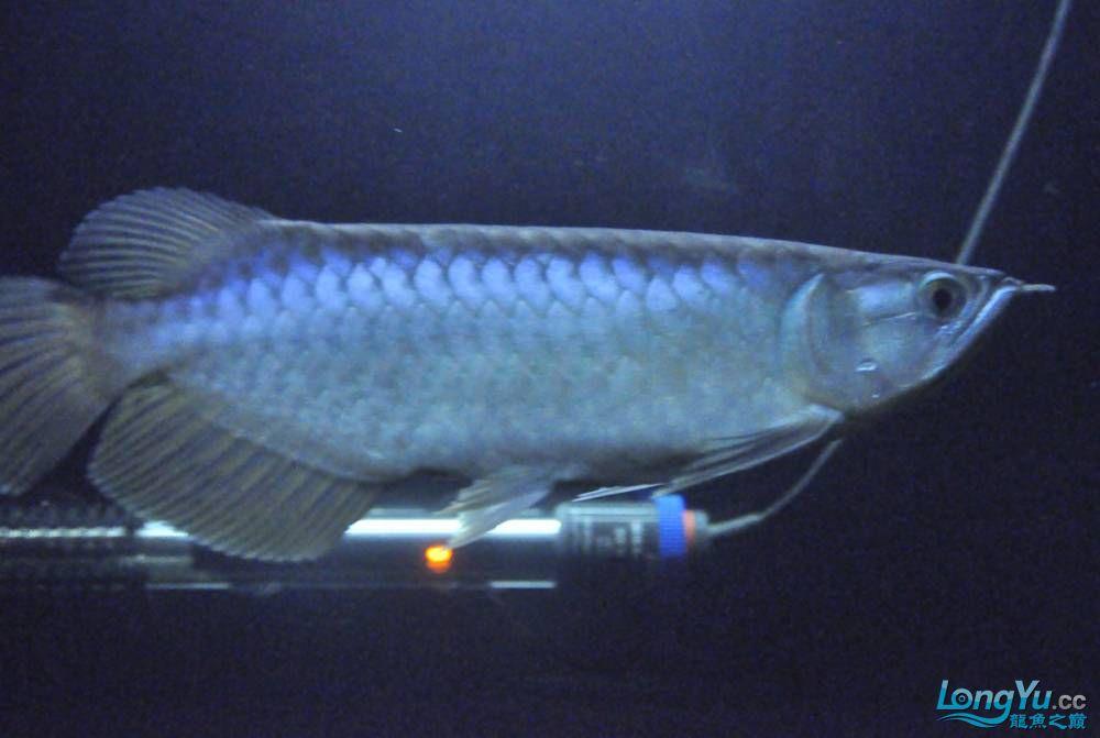 年底了·大家PP我的小青··嘎嘎··【西安鱼缸价格】 西安观赏鱼信息 西安博特第7张