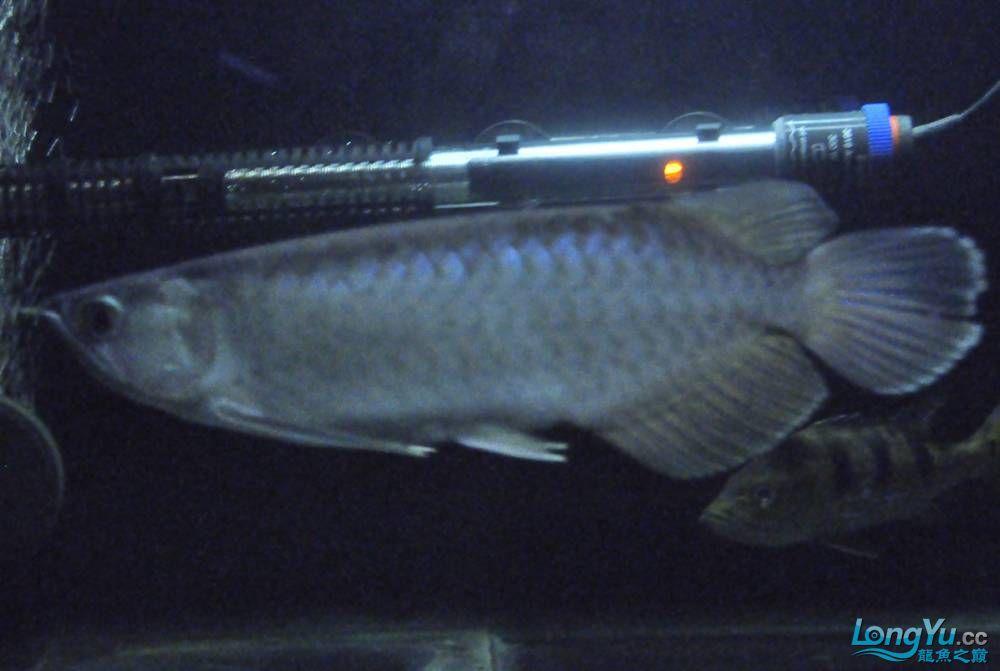 年底了·大家PP我的小青··嘎嘎··【西安鱼缸价格】 西安观赏鱼信息 西安博特第9张