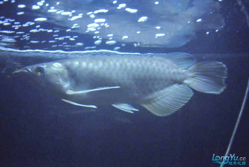 年底了·大家PP我的小青··嘎嘎··【西安鱼缸价格】 西安观赏鱼信息 西安博特第10张