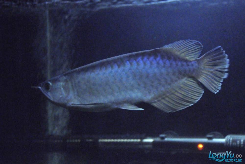 年底了·大家PP我的小青··嘎嘎··【西安鱼缸价格】 西安观赏鱼信息 西安博特第11张