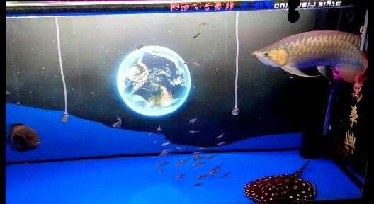 没事看看鱼儿 西安龙鱼论坛 西安博特第1张