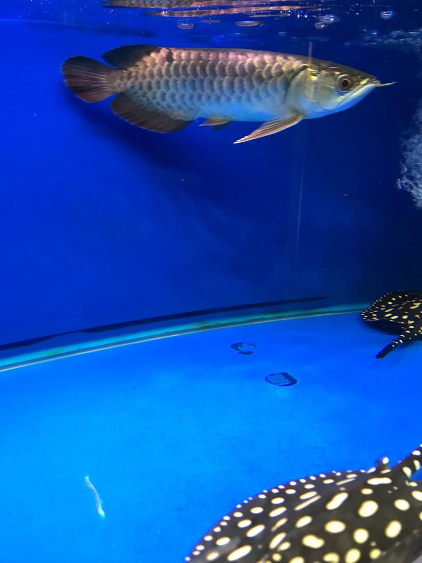 养鱼好 静静的看 西安观赏鱼信息 西安博特第1张