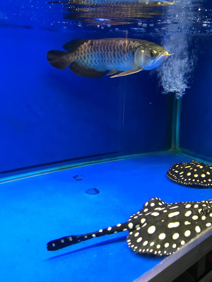 养鱼好 静静的看 西安观赏鱼信息 西安博特第2张