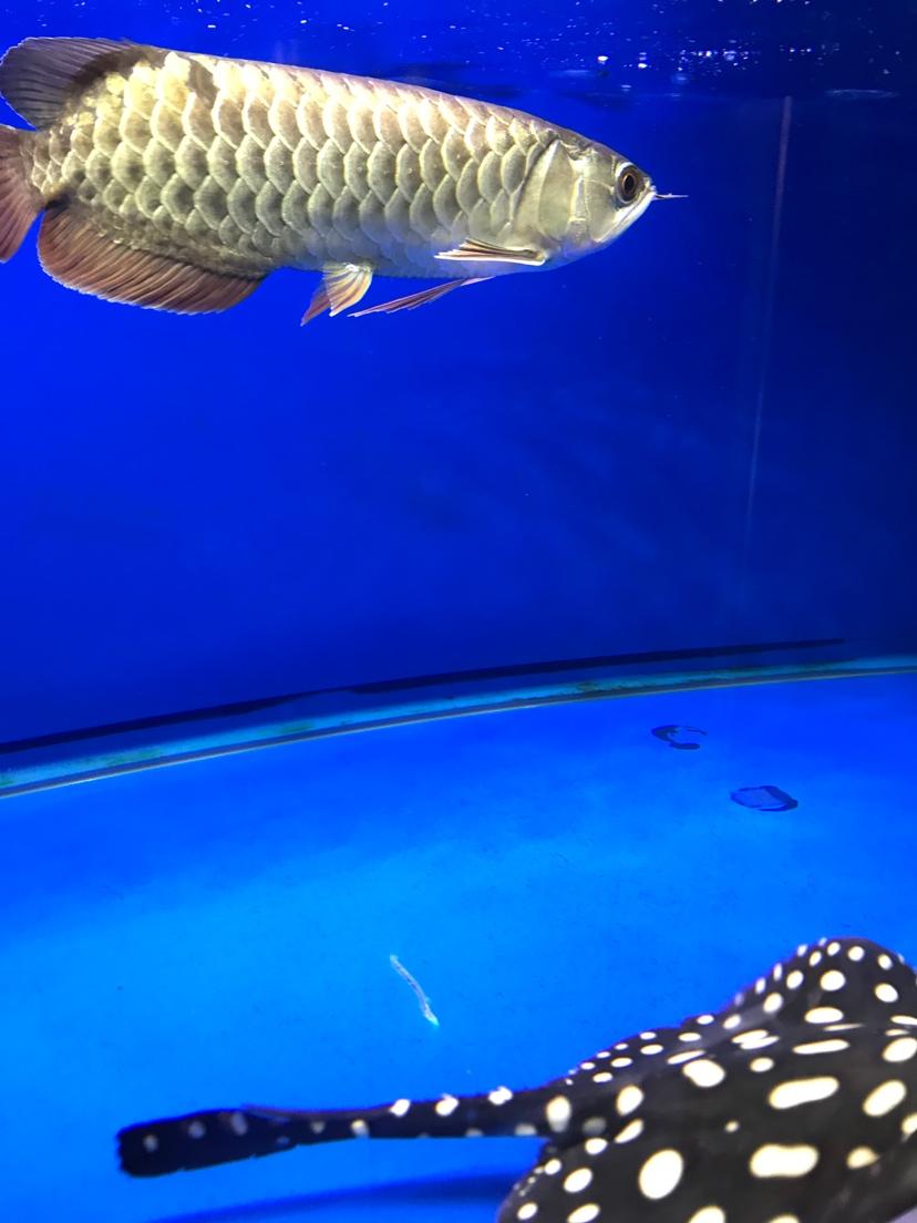养鱼好 静静的看 西安观赏鱼信息 西安博特第3张