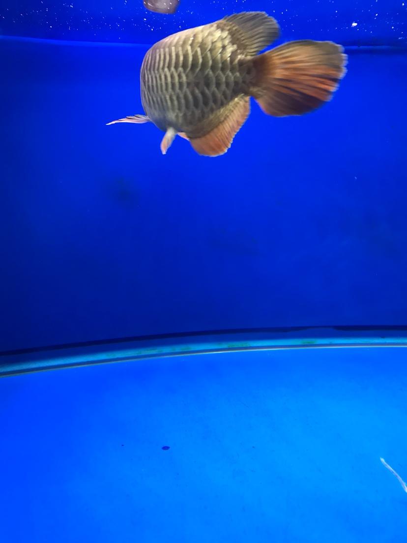 养鱼好 静静的看 西安观赏鱼信息 西安博特第6张