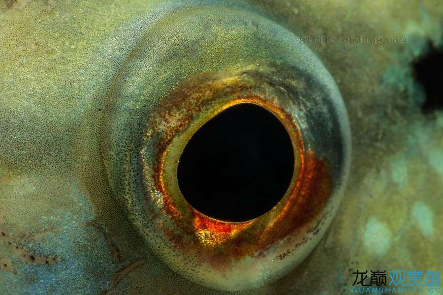 母性的伟大——口孵鱼类 西安龙鱼论坛 西安博特第12张