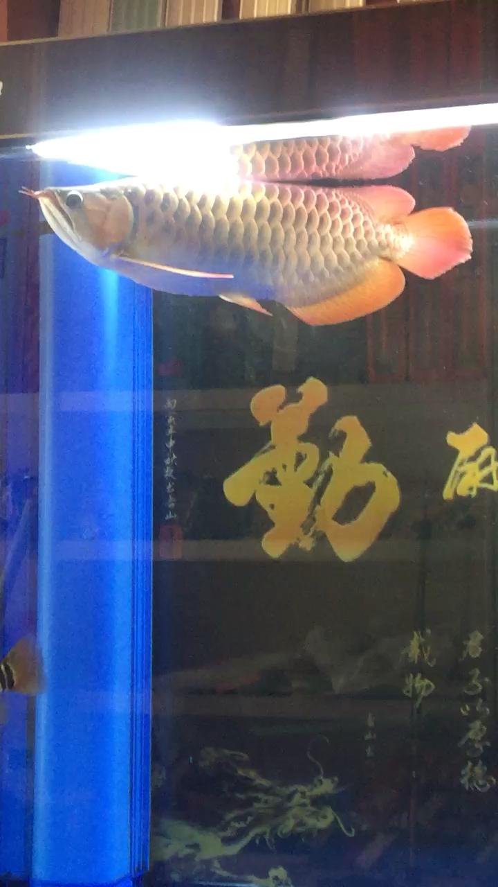 留念到家十个月了 西安龙鱼论坛 西安博特第1张