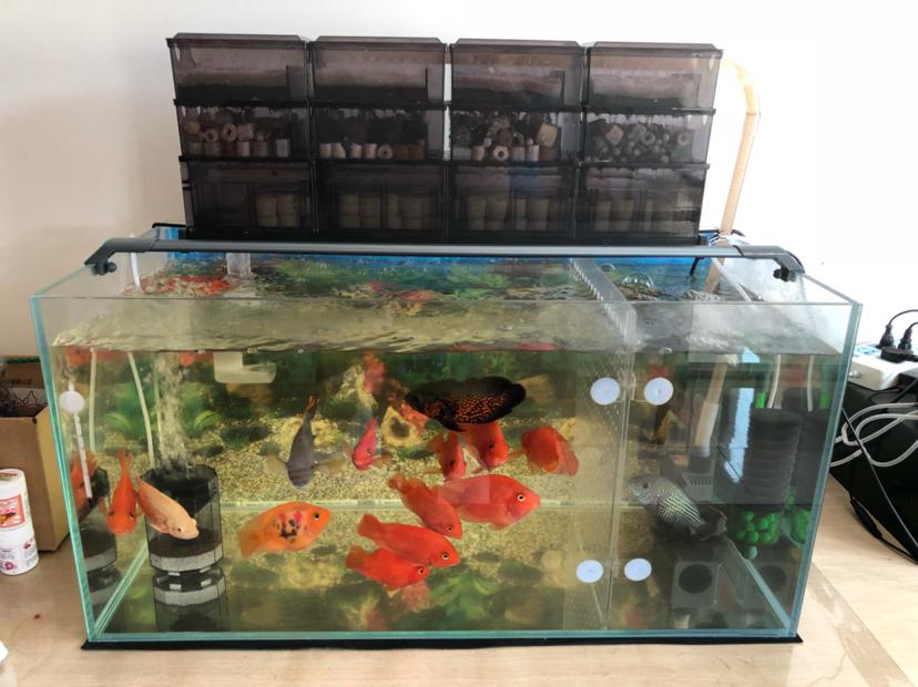 报个到鱼种混养 西安观赏鱼信息 西安博特第1张