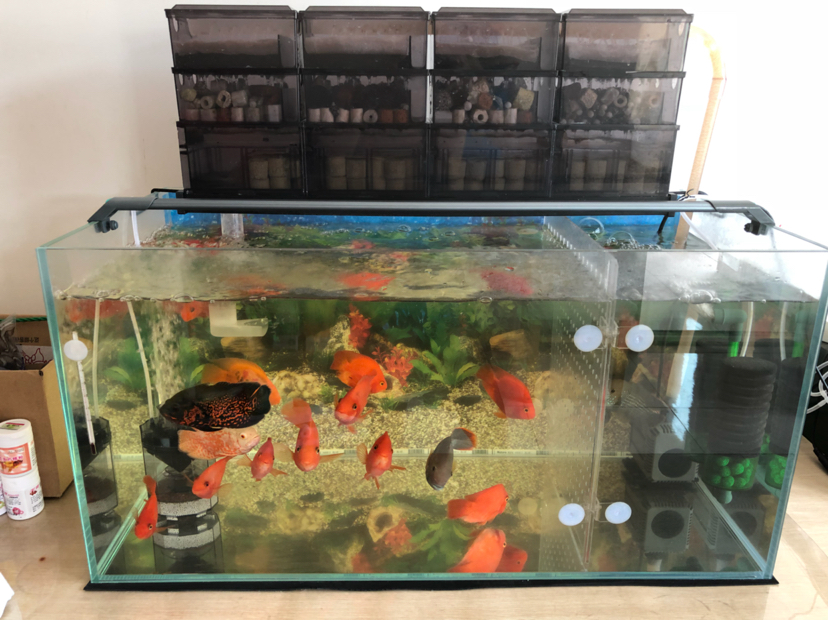 报个到鱼种混养 西安观赏鱼信息 西安博特第3张