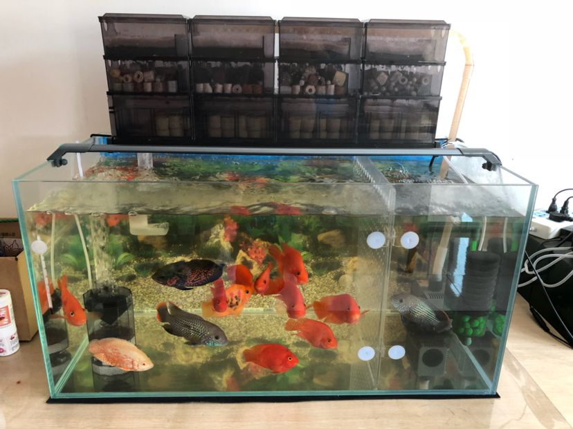 报个到鱼种混养 西安观赏鱼信息 西安博特第6张