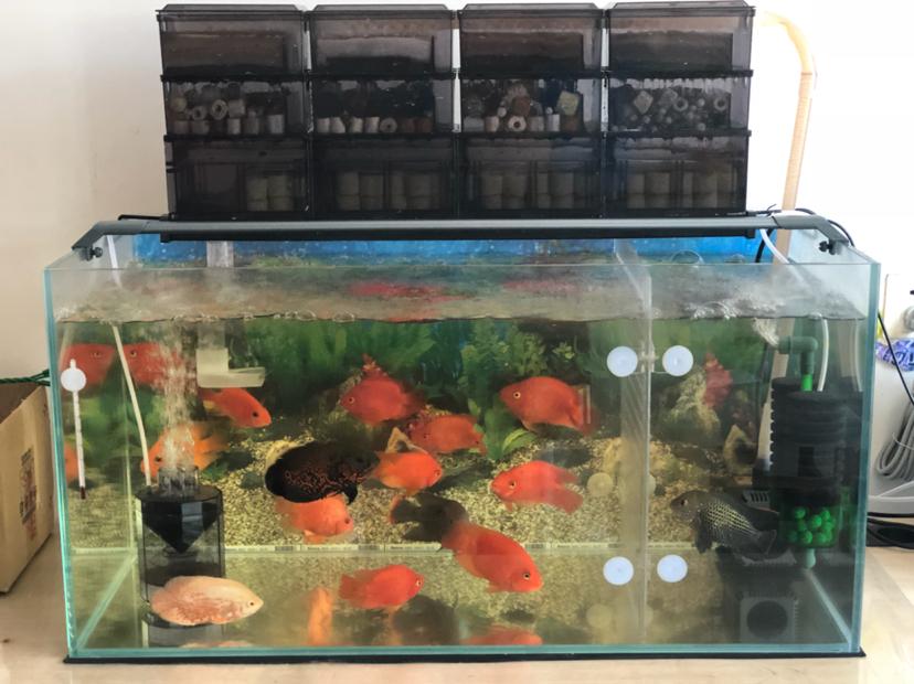 报个到鱼种混养 西安观赏鱼信息 西安博特第7张