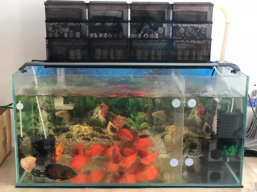 报个到鱼种混养 西安观赏鱼信息 西安博特第8张