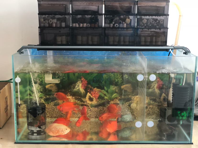 报个到鱼种混养 西安观赏鱼信息 西安博特第9张
