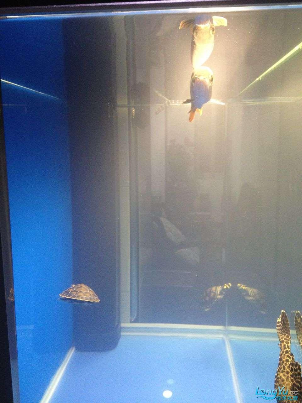 一缸水混了 西安观赏鱼信息 西安博特第2张