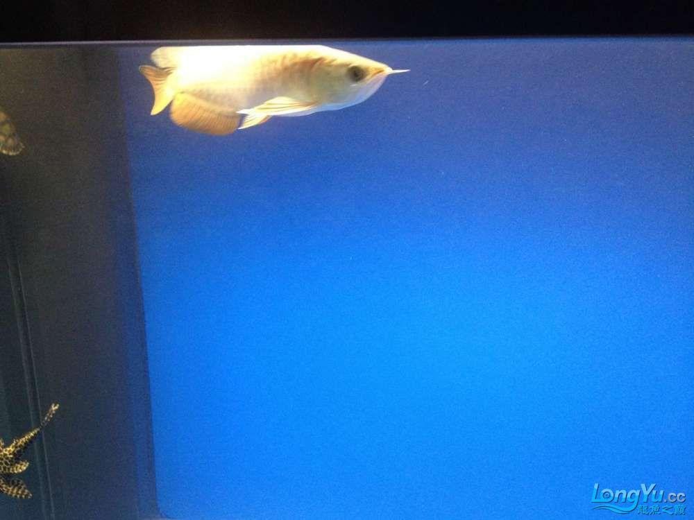 一缸水混了 西安观赏鱼信息 西安博特第3张