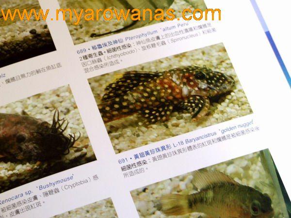 找不到编的了贵州鱼友圈 西安观赏鱼信息 西安博特第2张