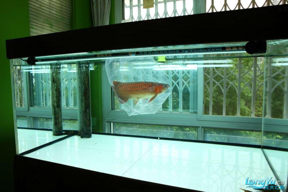 兔巴何2014年 更新下普通红外线和特殊万吉!!(4月26日 2014) 西安观赏鱼信息 西安博特第2张