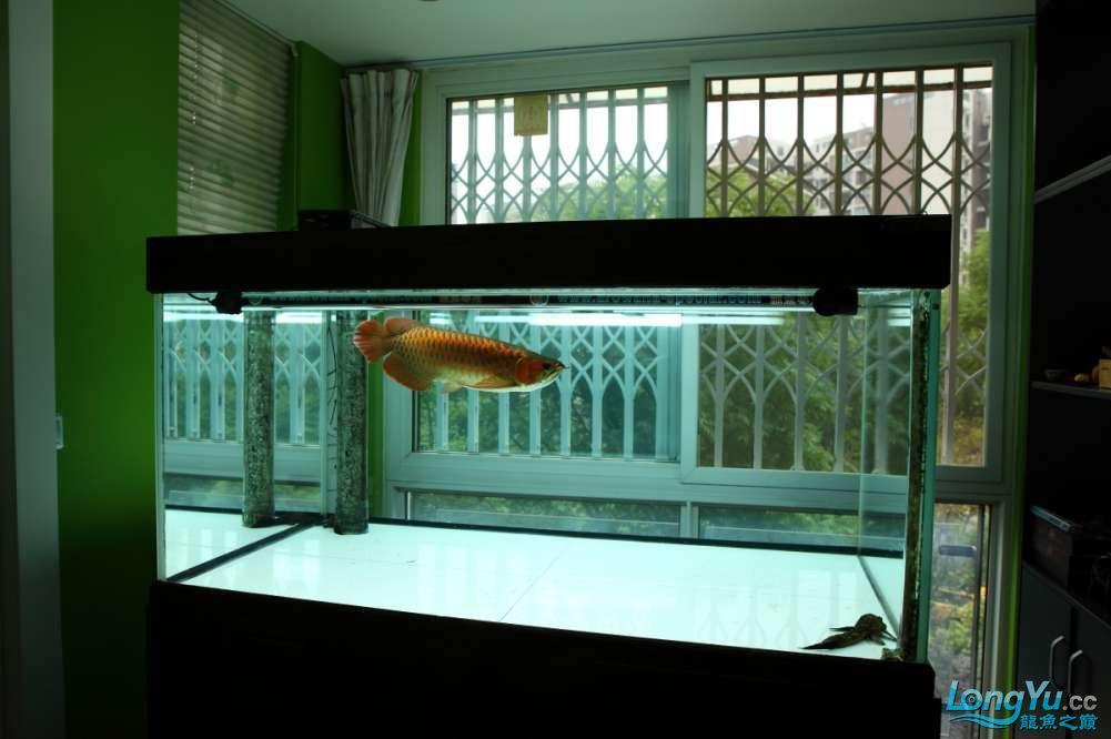 兔巴何2014年 更新下普通红外线和特殊万吉!!(4月26日 2014) 西安观赏鱼信息 西安博特第4张