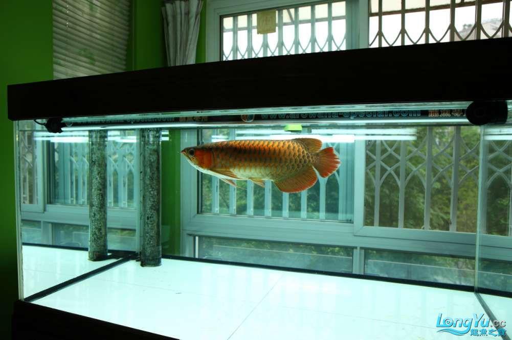 兔巴何2014年 更新下普通红外线和特殊万吉!!(4月26日 2014) 西安观赏鱼信息 西安博特第8张