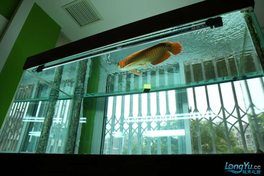 兔巴何2014年 更新下普通红外线和特殊万吉!!(4月26日 2014) 西安观赏鱼信息 西安博特第10张