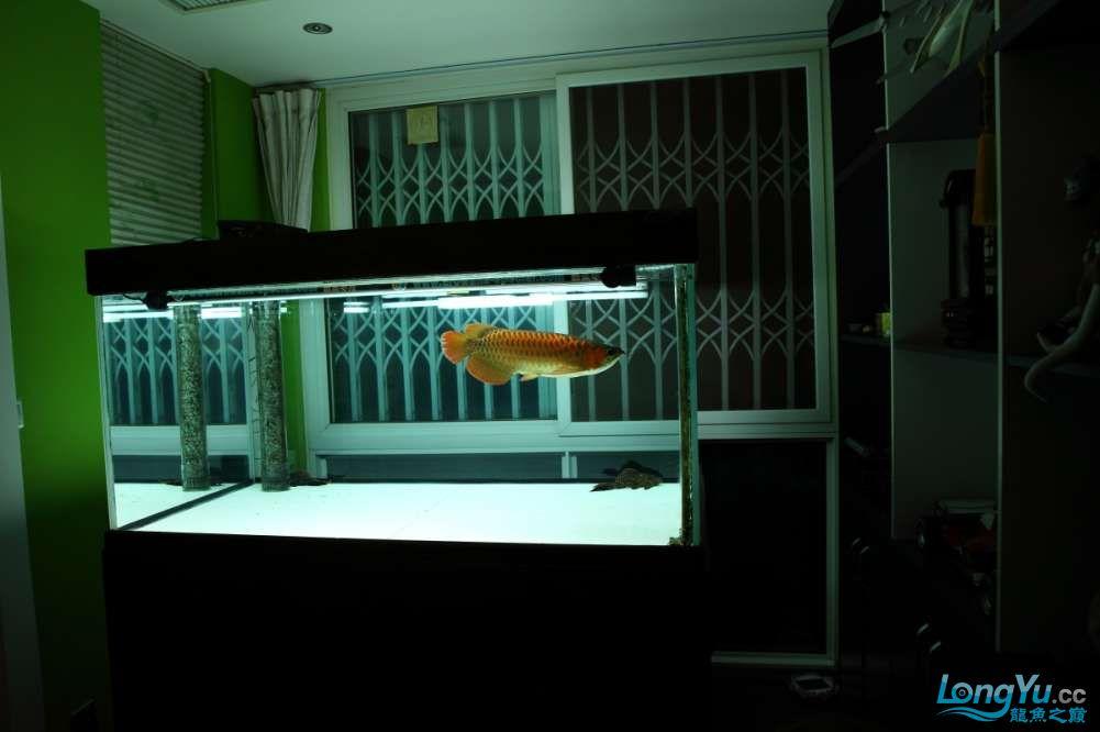 兔巴何2014年 更新下普通红外线和特殊万吉!!(4月26日 2014) 西安观赏鱼信息 西安博特第14张