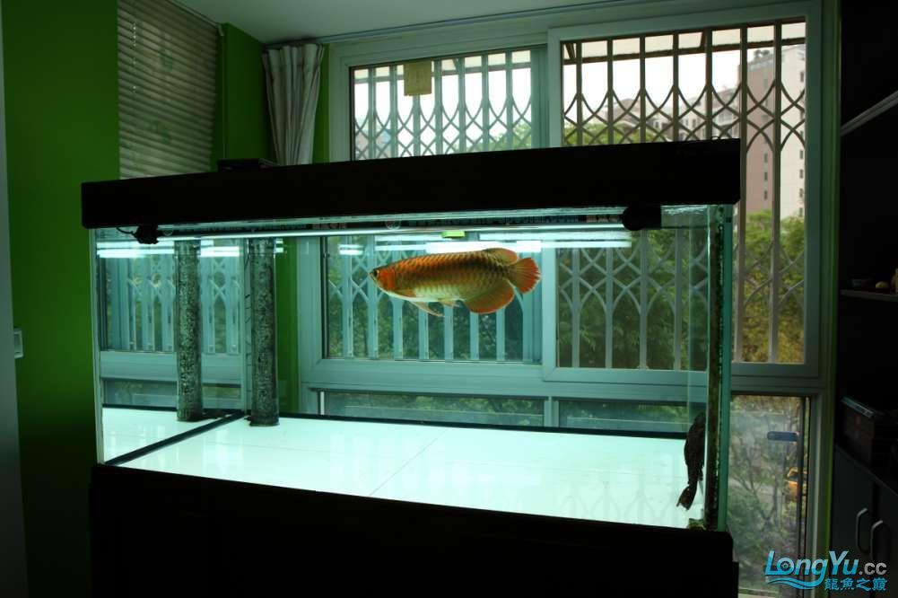 兔巴何2014年 更新下普通红外线和特殊万吉!!(4月26日 2014) 西安观赏鱼信息 西安博特第13张