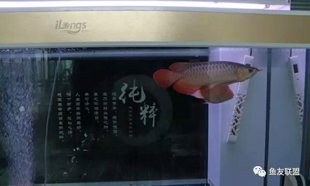 气泵气石全攻略鱼缸增氧你真的会吗? 西安龙鱼论坛 西安博特第3张