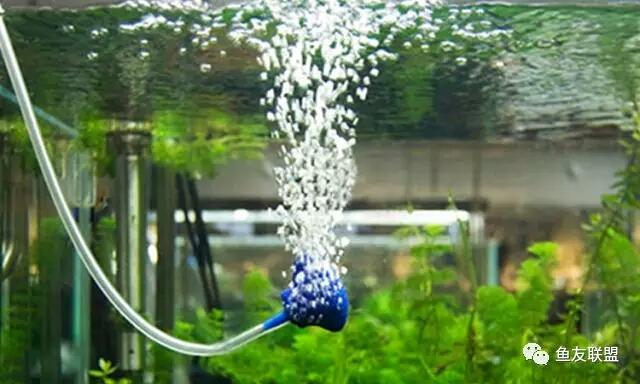 气泵气石全攻略鱼缸增氧你真的会吗? 西安龙鱼论坛 西安博特第4张