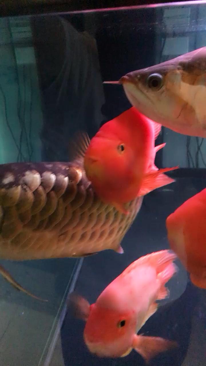 你们有多饿哦? 西安龙鱼论坛 西安博特第1张