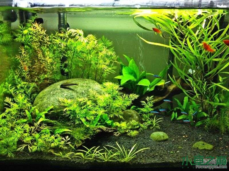 【西安祥龙水族】新人各位大大看看小弟的缸 西安龙鱼论坛 西安博特第1张