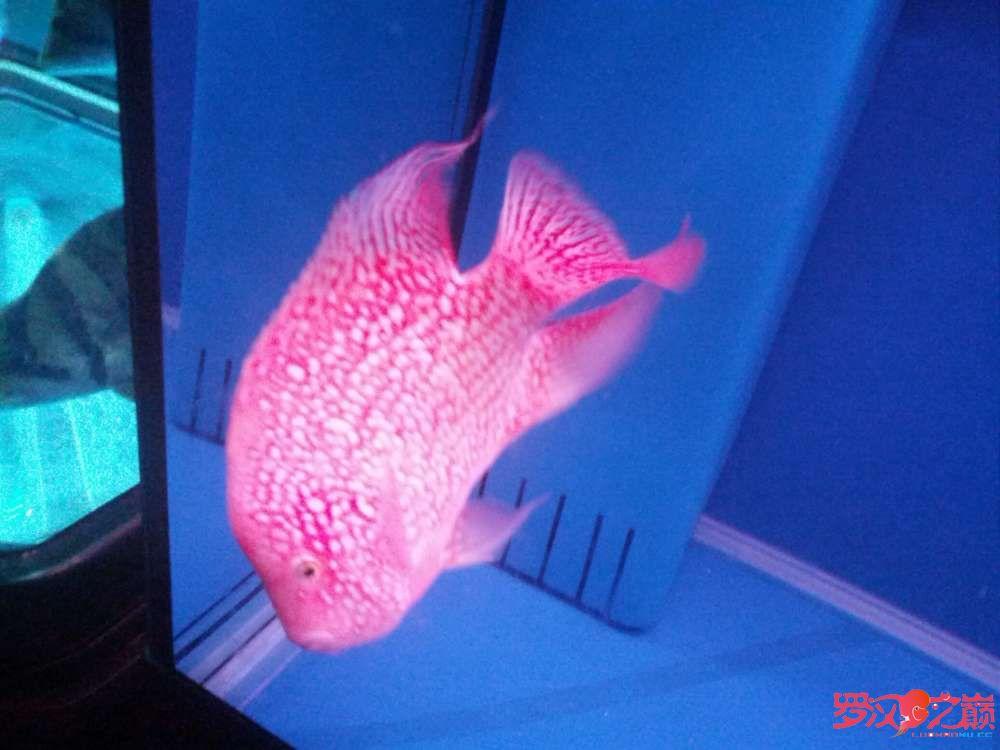 求高手、求师傅关【西安观赏鱼批发】于吃食问题 西安龙鱼论坛 西安博特第3张