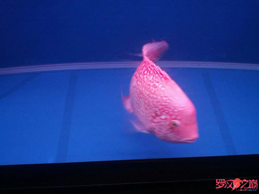 求高手、求师傅关【西安观赏鱼批发】于吃食问题 西安龙鱼论坛 西安博特第5张