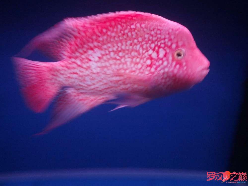 求高手、求师傅关【西安观赏鱼批发】于吃食问题 西安龙鱼论坛 西安博特第6张