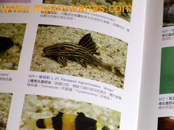 请教个灯光的问题 西安观赏鱼信息