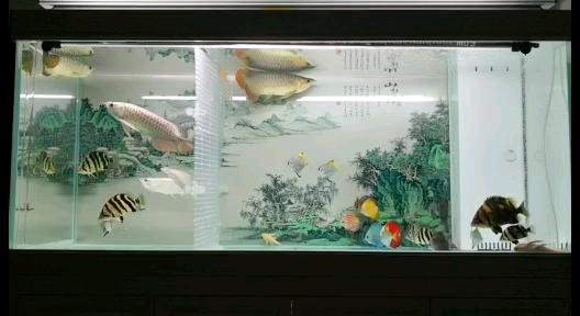 鱼缸水中灯如何用 西安观赏鱼信息