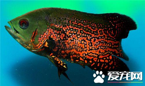 鱼缸过滤 西安龙鱼论坛