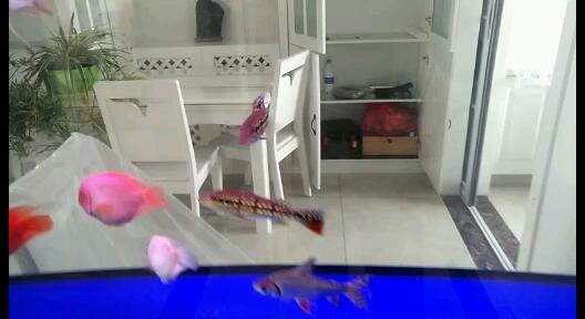 大神看看龙鱼 西安观赏鱼信息