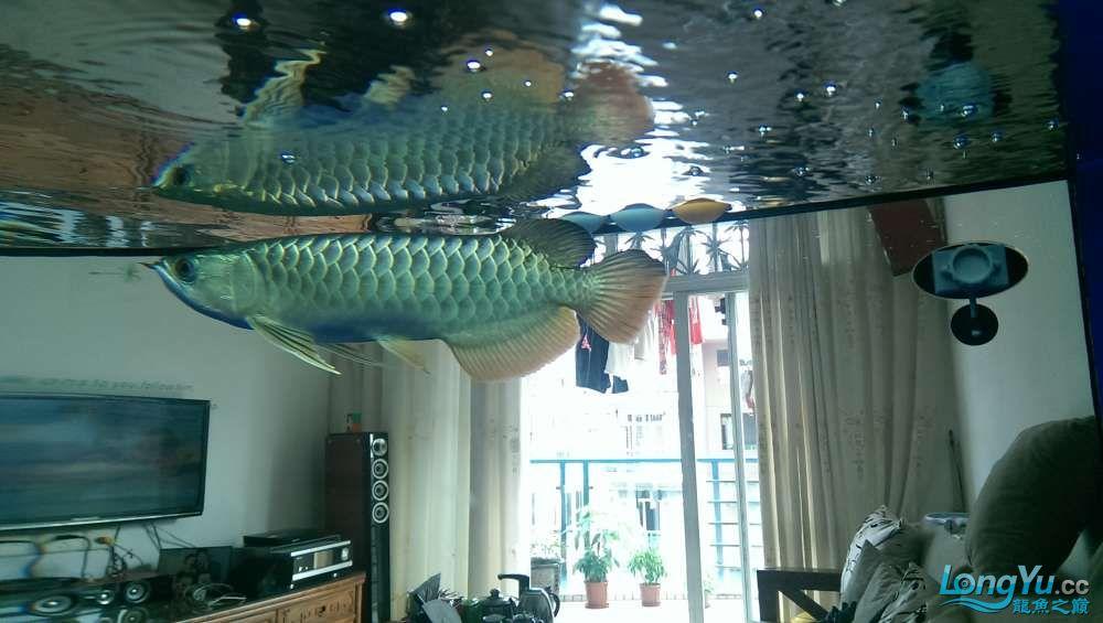 养鱼养心大侠们给点意见 西安龙鱼论坛 西安博特第2张