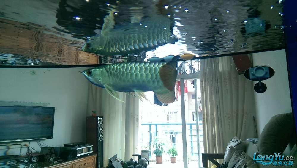 养鱼养心大侠们给点意见 西安龙鱼论坛 西安博特第3张