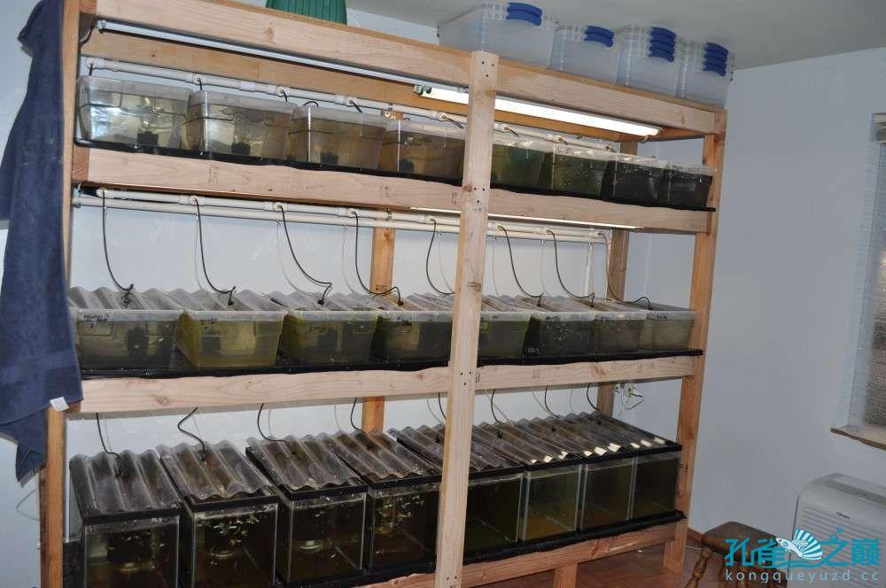 塑料系统缸细节 西安龙鱼论坛 西安博特第7张