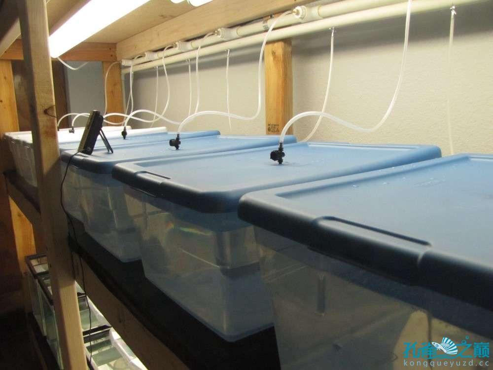 塑料系统缸细节 西安龙鱼论坛 西安博特第6张