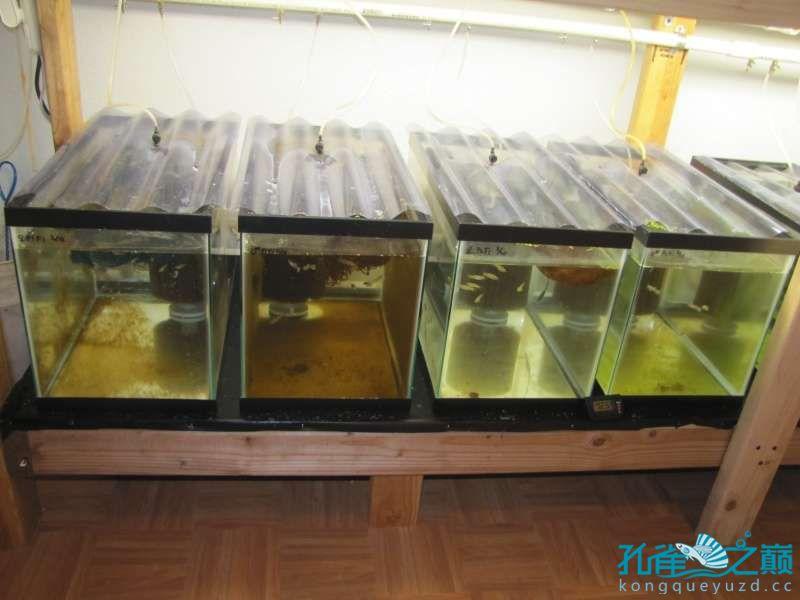 塑料系统缸细节 西安龙鱼论坛 西安博特第8张