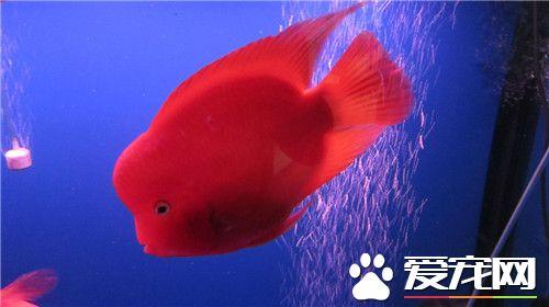 说说你们都混成功过什么鱼?