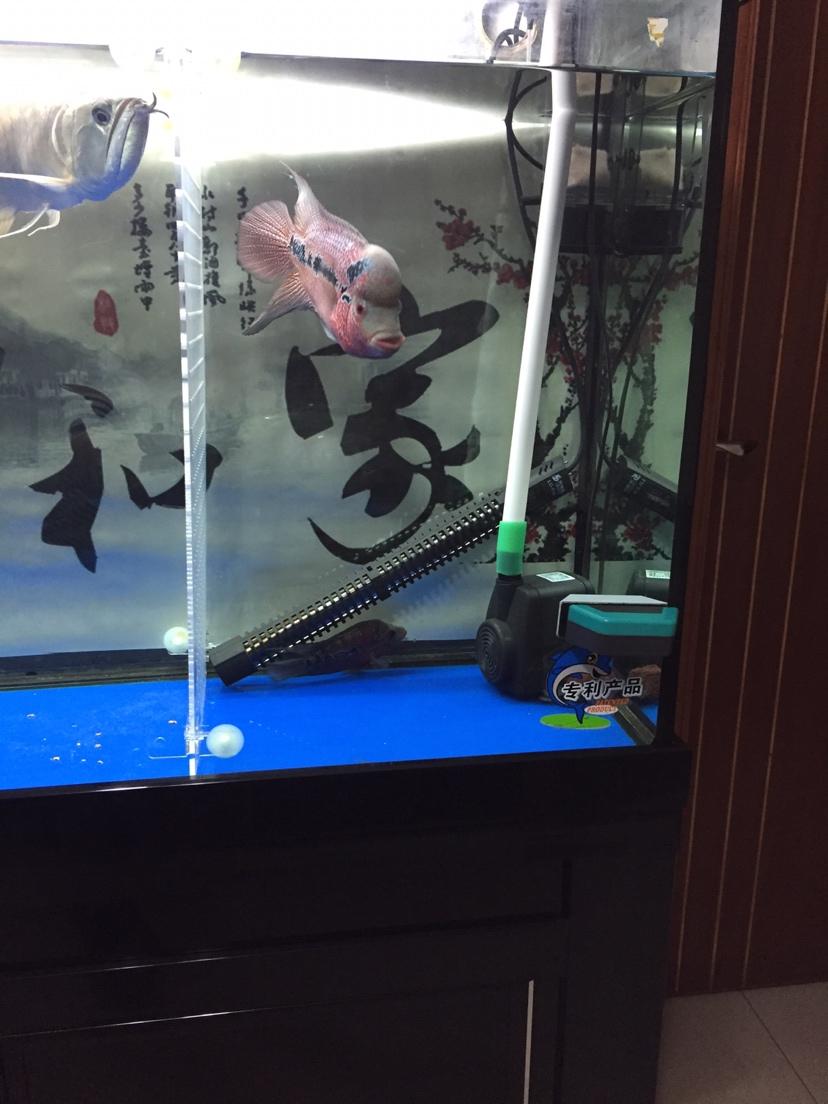 罗【西安哪里有观赏鱼】罗汉鱼 西安观赏鱼信息 西安博特第1张