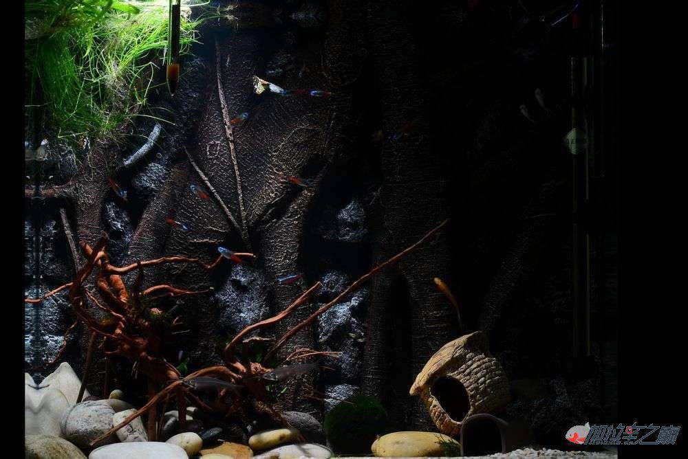 水虎缸超立体仿真Pu背景板原来是这样搞出来的哈哈 西安观赏鱼信息 西安博特第2张