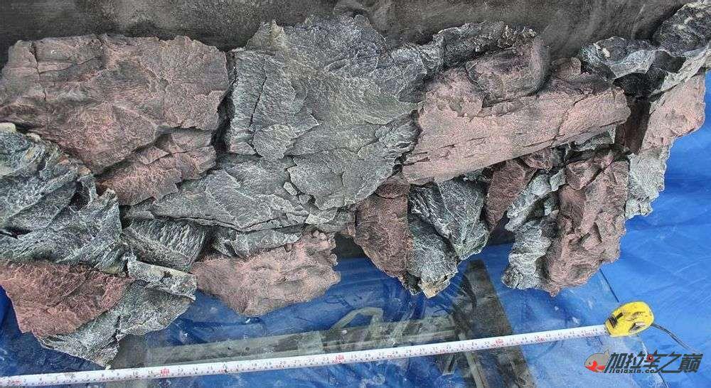 水虎缸超立体仿真Pu背景板原来是这样搞出来的哈哈 西安观赏鱼信息 西安博特第4张
