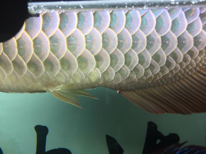 大哥给看看鱼怎么了 西安观赏鱼信息 西安博特第1张