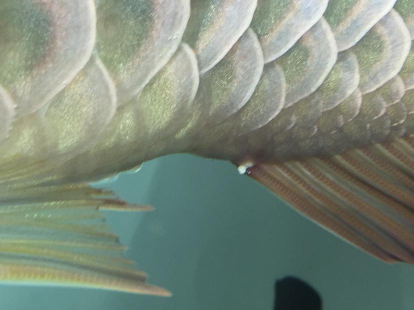 大哥给看看鱼怎么了 西安观赏鱼信息 西安博特第3张