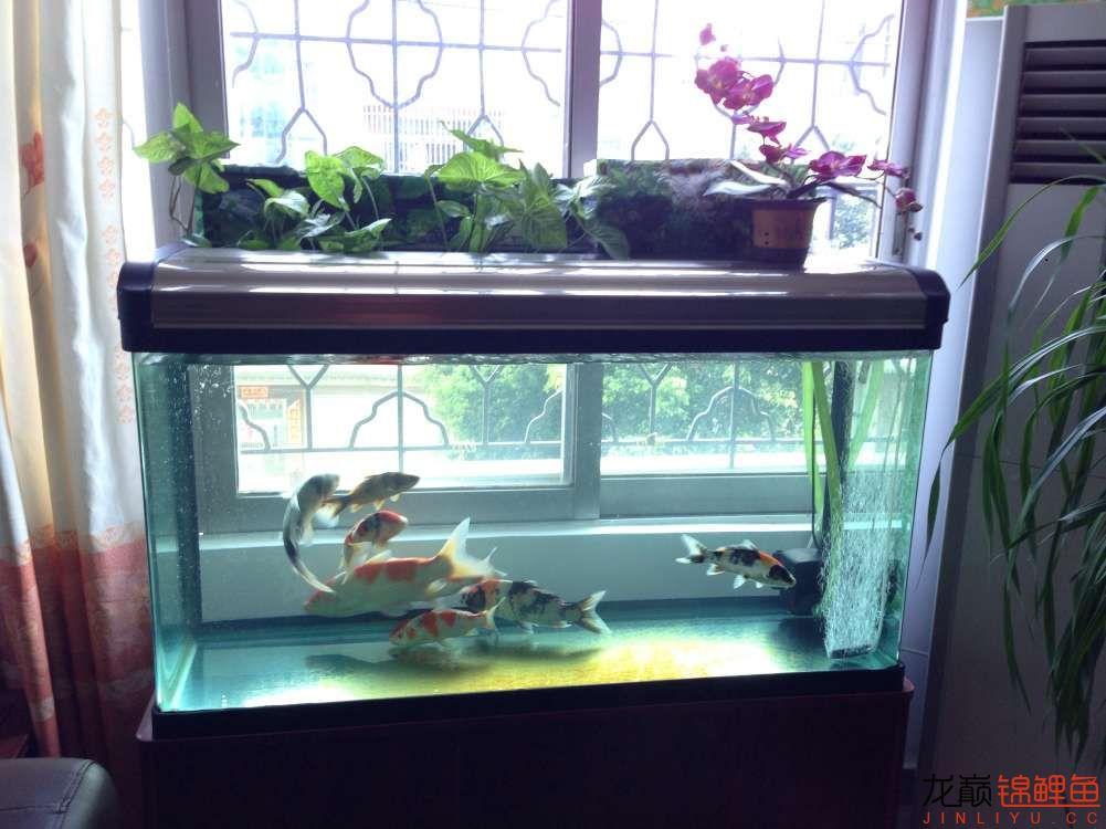我的锦鲤路想认识更多朋友 西安龙鱼论坛 西安博特第3张